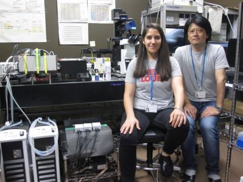 Científicos sevillanos descubren un mecanismo celular que abre un nuevo enfoque para conocer las causas del cáncer y el alzheimer